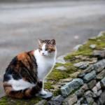le-chat-sur-le-mur-par-herve-le-gall-2011